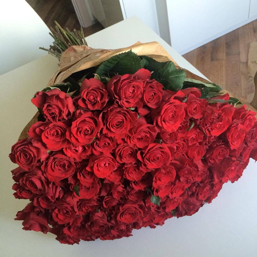вечнозеленое огромная картинка с розами каждой нас хотя
